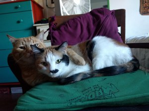 Photo of an orange tabby and a calico cat snuggling