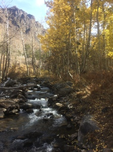 Golden aspen at McGee Creek in the Eastern Sierra